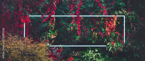 Neon light frame in colorful leaves and lush wall. Canvas Print