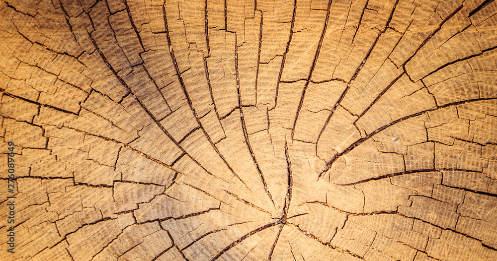 Fototapety, obrazy: Wooden background image: tree stump, close up