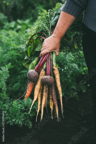 Fototapeta  Bunch of vegetables in women's hand