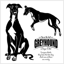 Greyhound - Vector Illustratio...