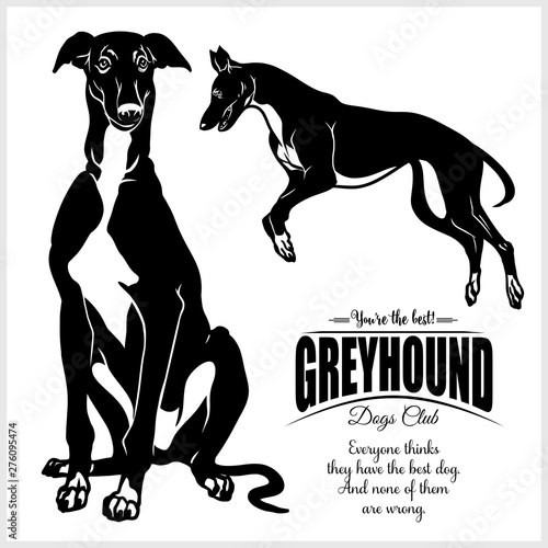 Fotomural Greyhound - vector illustration for t-shirt, logo and template badges