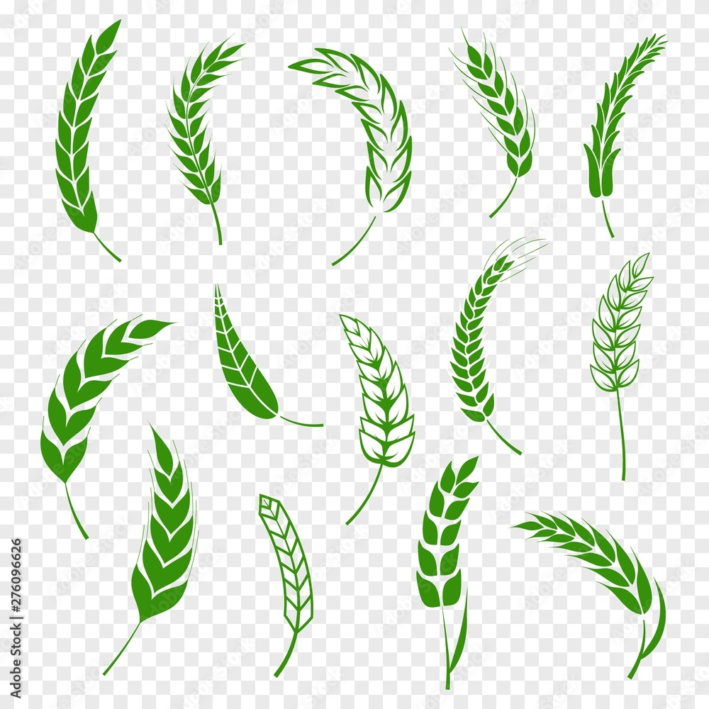 Fototapety, obrazy: Set of simple green wheats ears icons and wheat design elements for beer, organic or local farm fresh food, bakery themed wheat design, grain, beer elements, rye simple. Vector illustration eps10