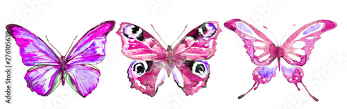 beautiful pink blue butterfly,watercolor,isolated on a white background