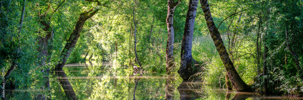Fototapety, obrazy: Water canal in the Green Venice in the Marais Poitevin, France