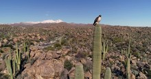 Hawk Perches High In Arizona D...