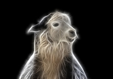 Fractal Color Image Of A Llama With Ears Pressed Against A Contrasting Black Background.