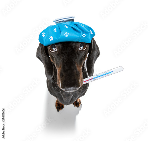 Cadres-photo bureau Chien de Crazy ill sick dog with illness