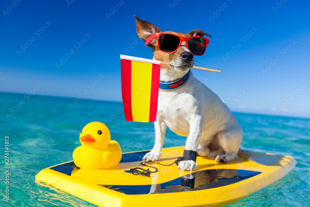 Fototapety, obrazy: surfer dog  at the beach