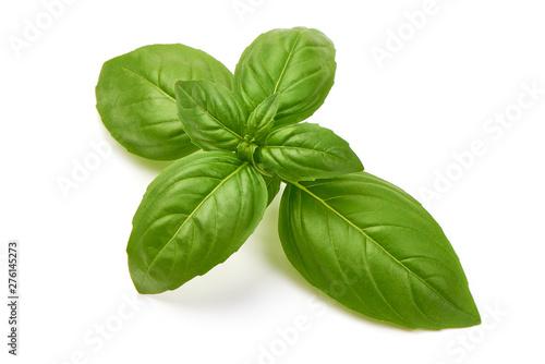 Obraz Fresh organic Basil Leaves, close-up, isolated on white background - fototapety do salonu