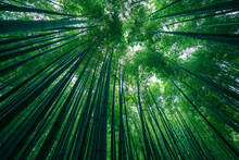 Photograph Of Park Of Bamboo Forest