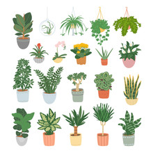 Big Set Of Houseplants Isolate...