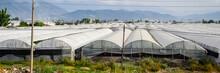 Turkish Greenhouses, Growing T...