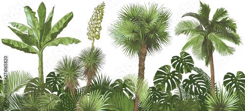 fototapeta na drzwi i meble Vector Tropical palms, plants, leaf, foliage, monstera