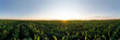 canvas print picture - Aerial view of the green corn field. Beautiful agricultural landscape.