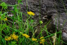Yellow Wildflowers Growing Nex...