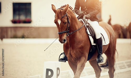 Foto op Canvas Paarden Equestrian sport. Portrait sports stallion iin the double bridle.