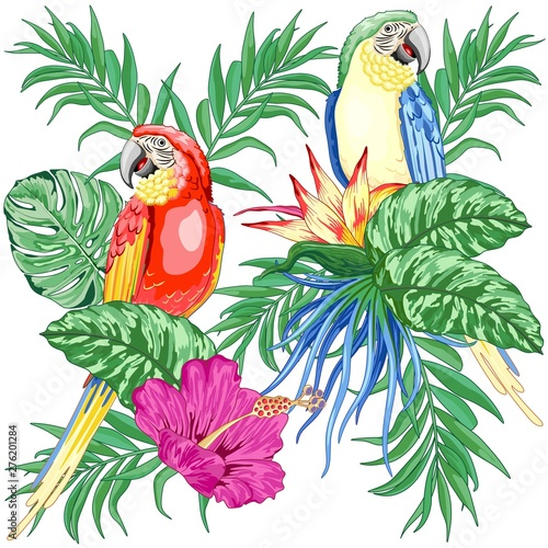 Foto op Aluminium Draw Macaws Parrots Exotic Birds on Tropical Flowers and Leaves Vector Illustration