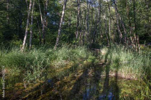 Swamp land in washington state - Buy this stock photo and