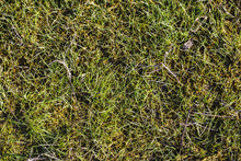 Green Grass Texture With Sprigs