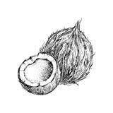 Hand drawn coconut with half - 276212482
