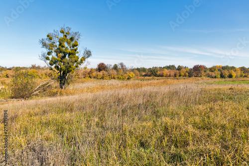 Foto auf Gartenposter Landschappen Ros river valley autumn landscape at sunset, Ukraine.