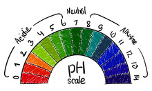PH Value Scale Science, Chart For Acid And Alkaline Solutions, Acid-base Balance Infographic Kids Educational