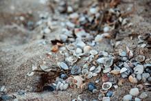 Seashells On The Sea Sand. Close Up.