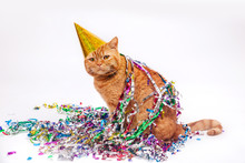 Red Cat In A Birthday Hat And Confetti On White Background