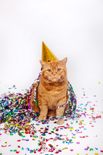 Adorable Red British Feline With Confetti And A Party Hat