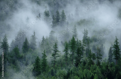 Poster Taupe Panoramic view of misty forest. Foggy forest in a gloomy landscape