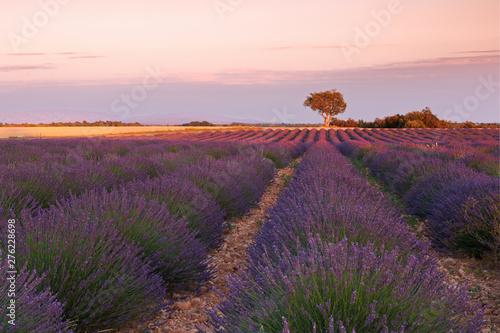 Schilderijen op glas Landschap Field of flowering lavender