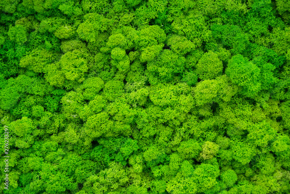 Fototapety, obrazy: Artificial green moss wall for garden decor. Backgrounds and Textures