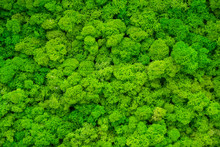 Artificial Green Moss Wall For Garden Decor. Backgrounds And Textures