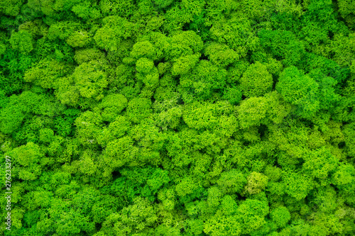 fototapeta na lodówkę Artificial green moss wall for garden decor. Backgrounds and Textures