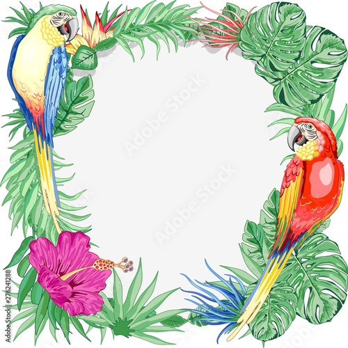 Foto op Aluminium Draw Macaws Parrots Exotic Birds Summer Nature Round Frame Vector Graphic Art