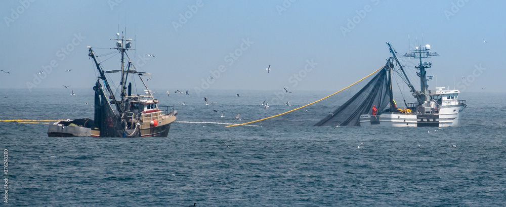 Fototapeta Commercial squid fishing boats work around the clock, including daylight hours, using purse seine nets as squid return to the waters of the Monterey Bay., off the coast of central California.