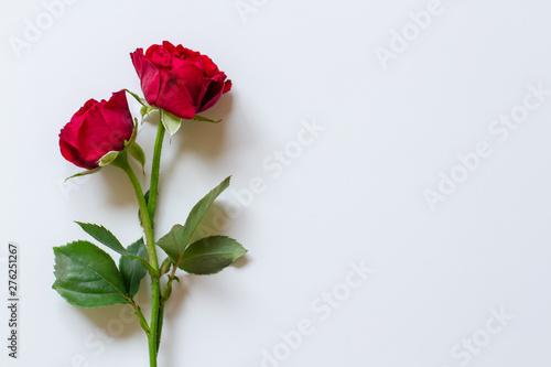 赤薔薇の背景素材