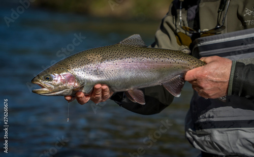 Fotobehang Brown & Rainbow trout gently released