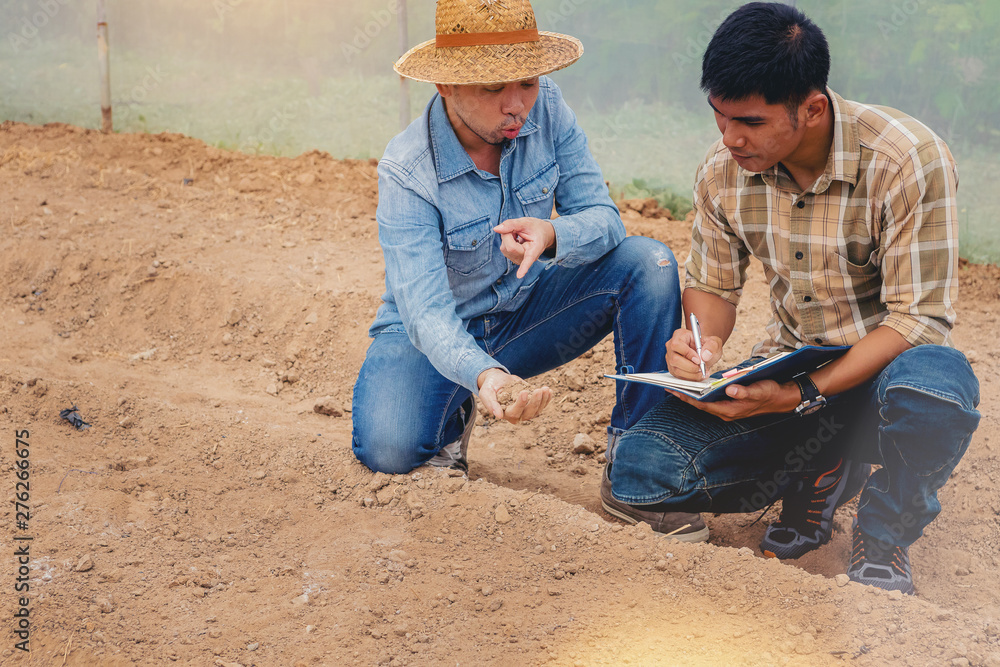 Fototapety, obrazy: Farmer owner and worker checking control soil quality before seed plant in the greenhouse.