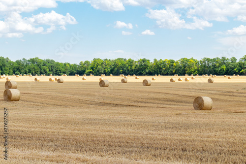 Canvas-taulu harvested cereal wheat barley rye grain field, with haystacks straw bales stakes