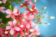 Beautiful Pink And Red Rangoon...