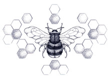 Honey Bee Surrounded By Pattern Of Honeycombs
