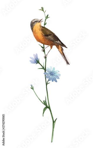 Fototapeta Watercolor bird on the flower obraz
