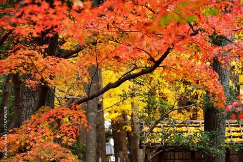日本庭園のカラフルな秋の紅葉