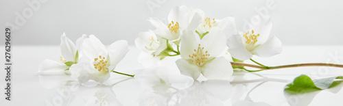 Valokuva panoramic shot of jasmine flowers on white surface
