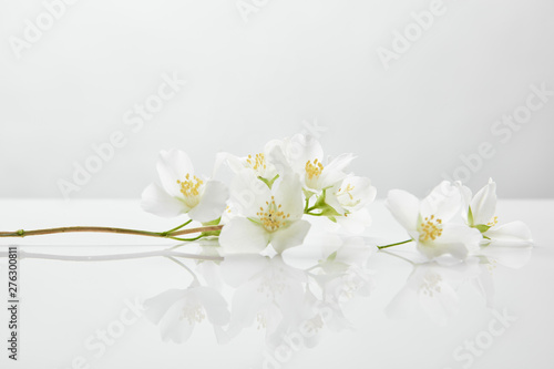 fresh and natural jasmine flowers on white surface фототапет