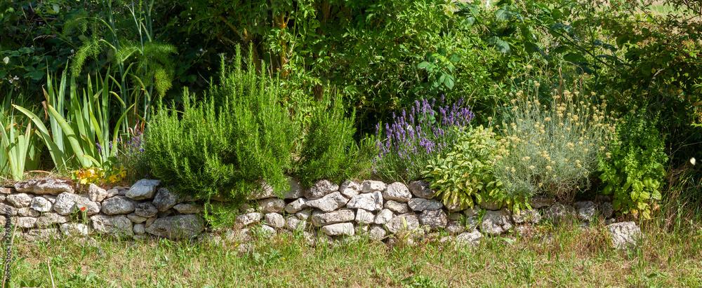Fototapeta Bordure de plantes médicinales et aromatiques