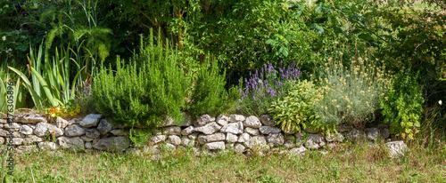 Obraz Bordure de plantes médicinales et aromatiques - fototapety do salonu