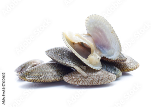 Photo  Clams in a white background