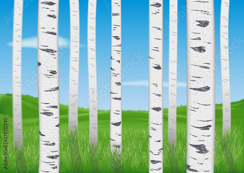 Canvas Prints Birds in the forest view of the green meadow through the realistic trunks of young birches. blue sky with rare clouds. rural landscape